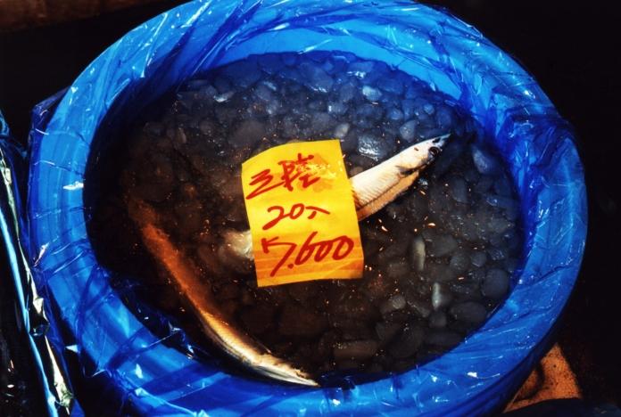 poisson-marché-sceau